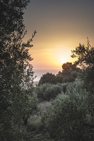 Olive trees sea and sunset. Kalamata Greece photo