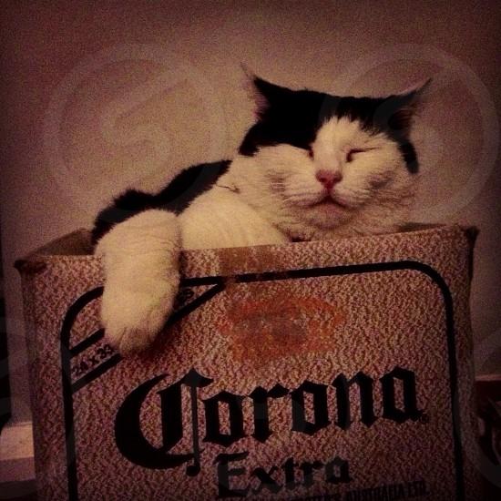 Cute cat beer funny photo