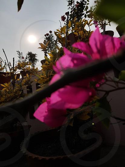 Focused Sun photo