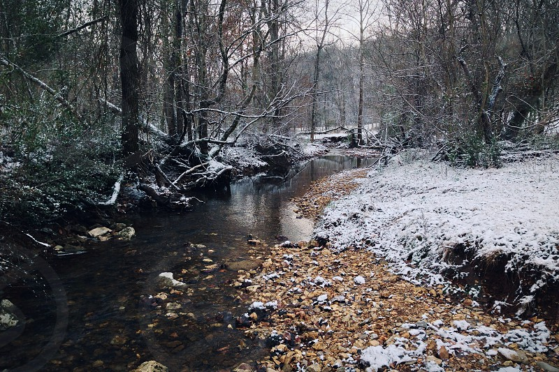 forest river in winter season photo