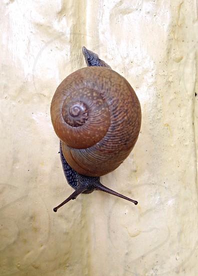 Snail on concrete statute photo