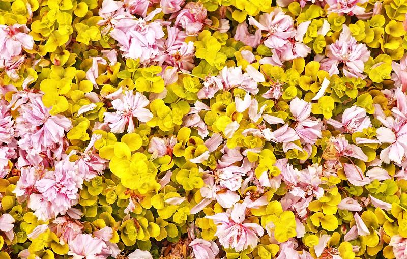 Pattern - flowers photo