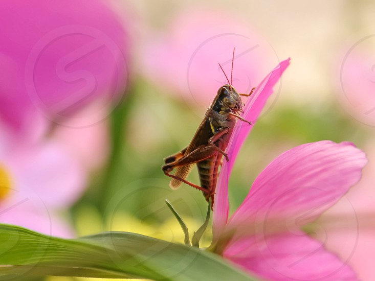 black and brown insect on pink flower pedal photo