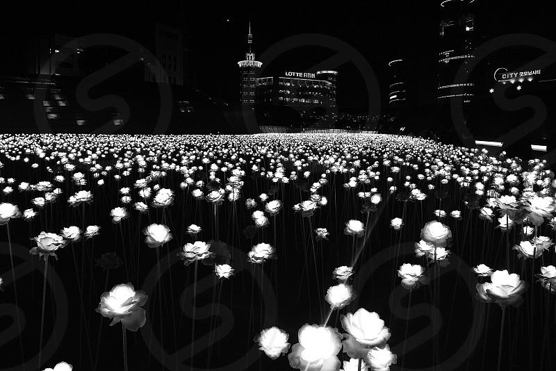 Flower of light in Seoul.  photo