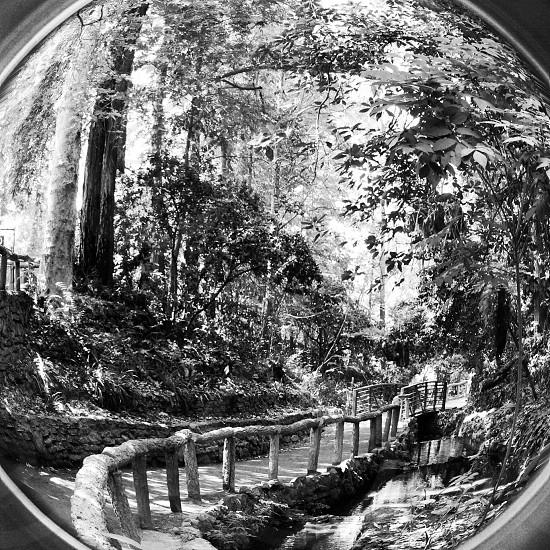 Griffith Park Los Angeles CA photo