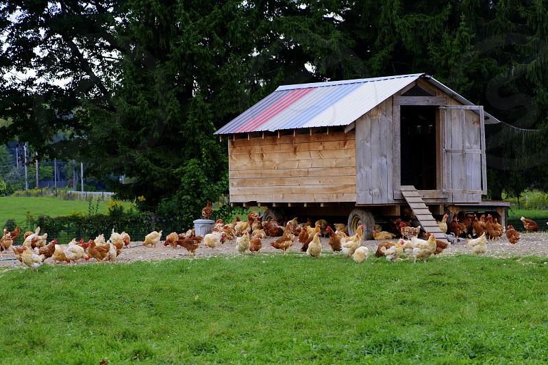 Chicken Farm with unique chicken coop photo