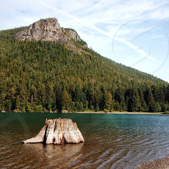 green pine tree on mountain nature photography photo