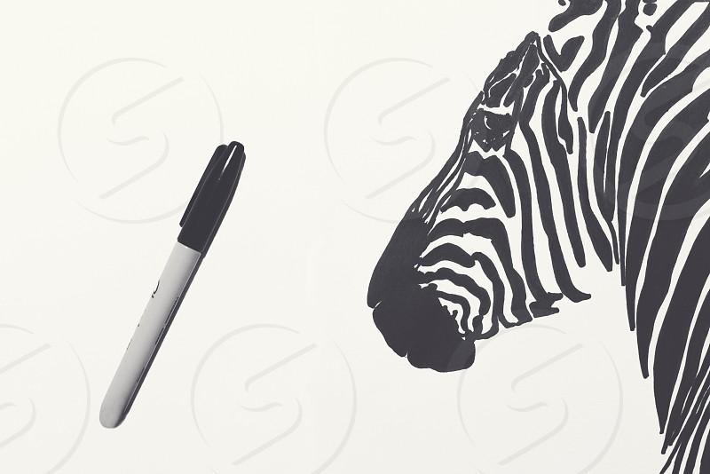 Zebra Drawing photo