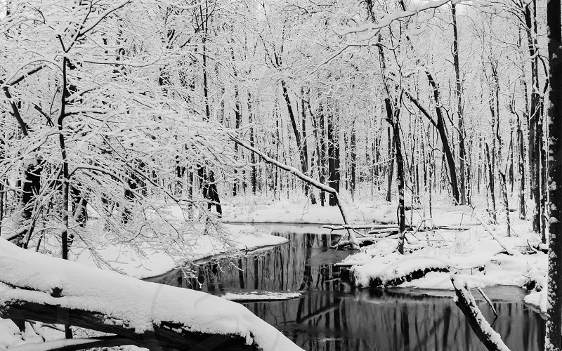 Snow covered trees in the woods with a creek.  photo