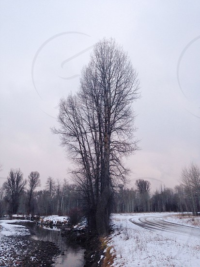 tree beside river on winter season photo photo