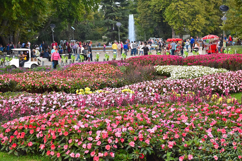 people walking near pink and white flower field during daytime photo