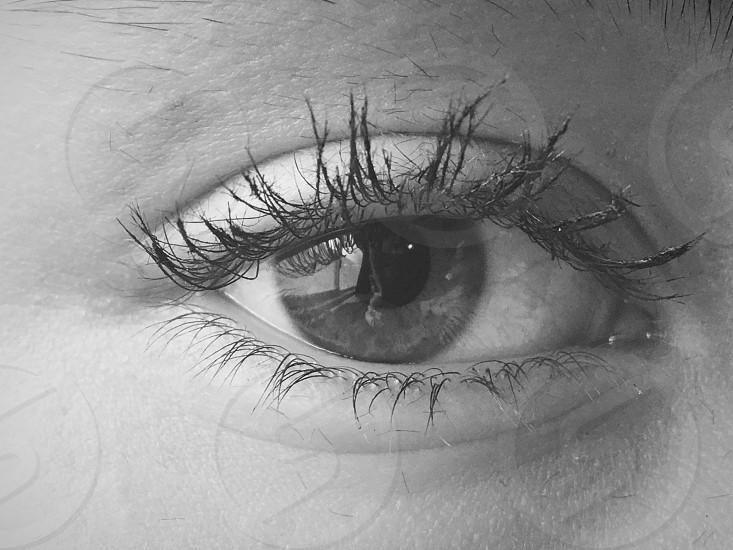 The eye has it photo