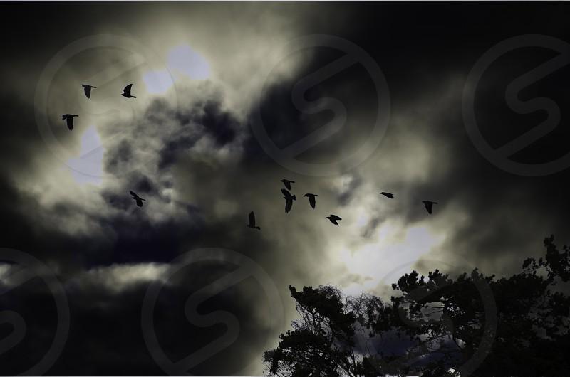 Silhoutte of birds against a dark sky photo