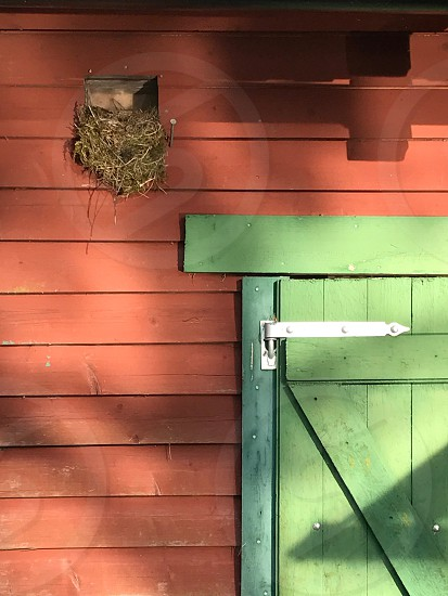 Early bird birds nest morning evening old building old cottage green door red wall wooden wall wooden door  photo