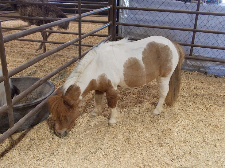 brown and white pony on cage photo