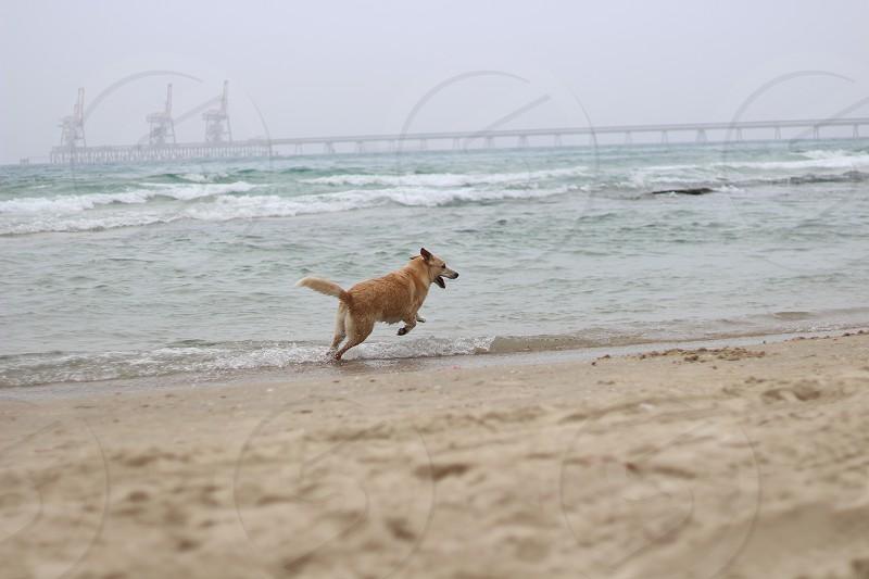 dog running on seashore photo