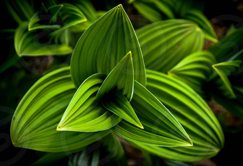 plant macro Alaska Hatcher's Pass green photo