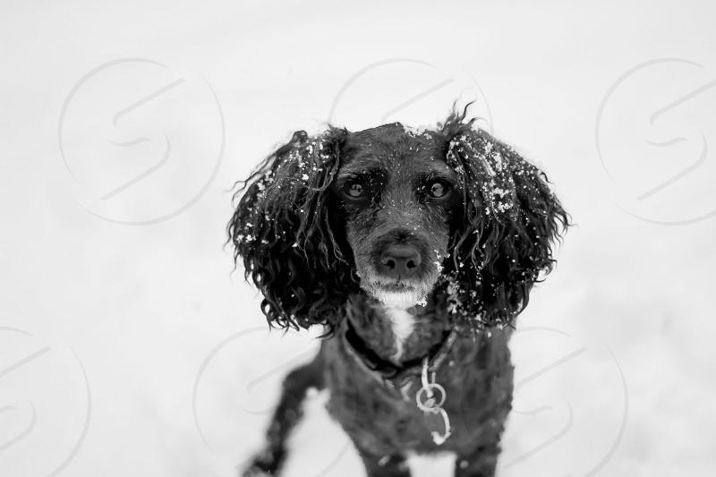 gray and black long haired medium sized dog photo