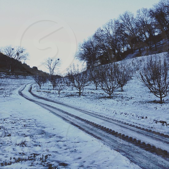 roadway cover by snow with tree view photo