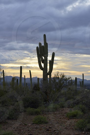 Cactus and Deserts photo