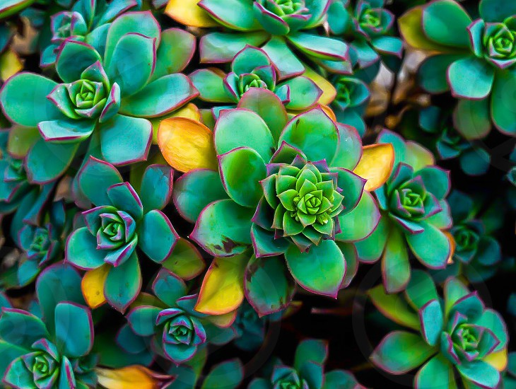 green and yellow succulent plant photo
