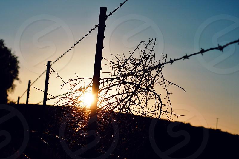 Sunrise light morning awaken wire fence weed photo
