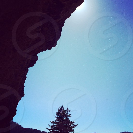 silhouette photo of tree under blue sky photo