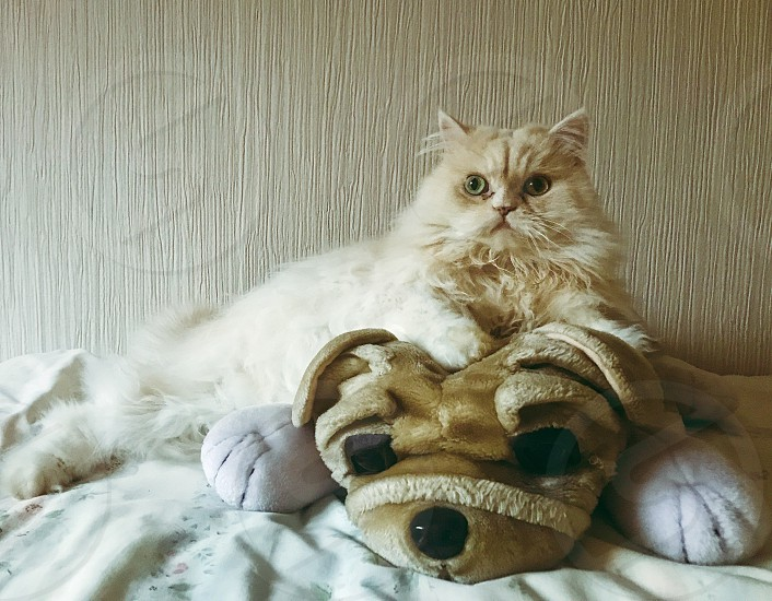 Cat animals Russia Persian Cat toy photo