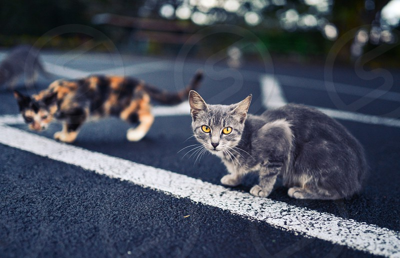 strays stray cats stray cats cat kittens kitten wild parking lot animal yellow eyes cute photo
