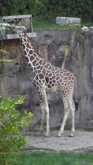 So tall! photo