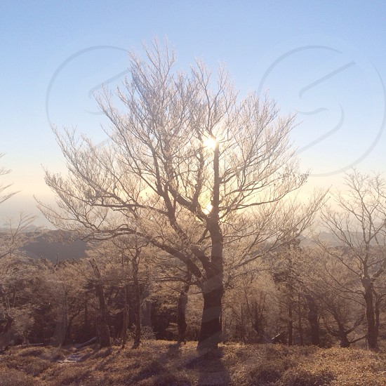 leafless tree photo