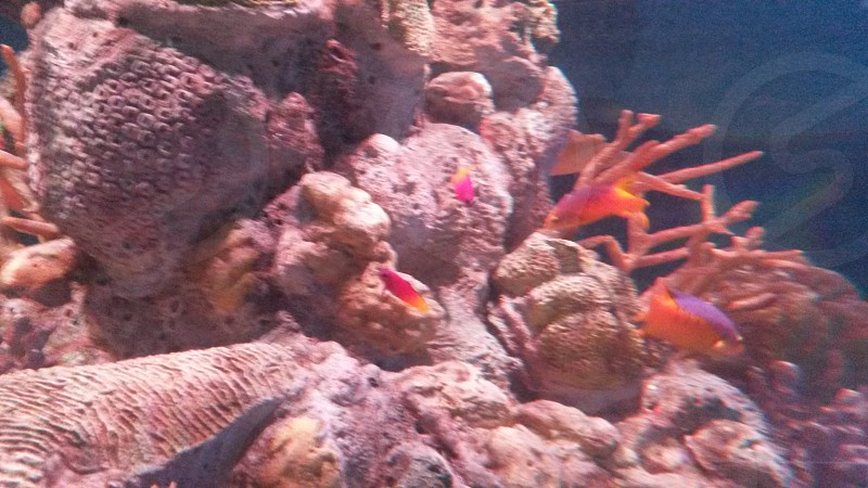 Aquarium in dubuque.ia photo