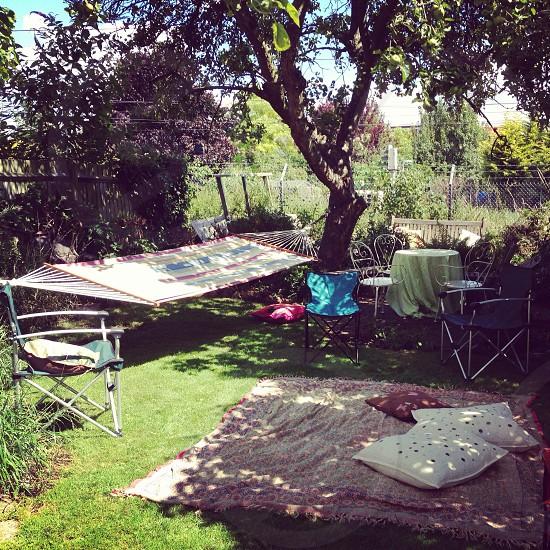 Back garden full of sunshine photo