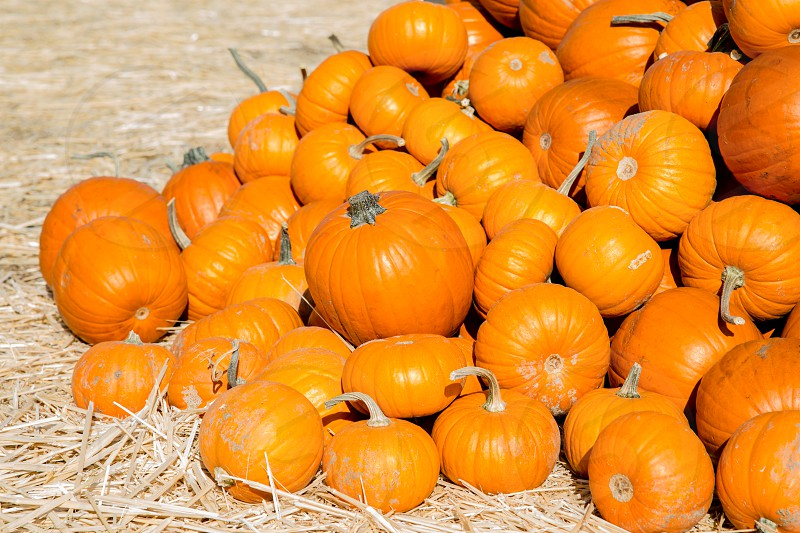 Pile of Pumpkins photo