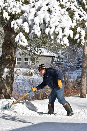 snow shoveling household chores driveway shovel man winter cap toque mittens boots pine trees snow laden branches distant building outdoors exercise photo