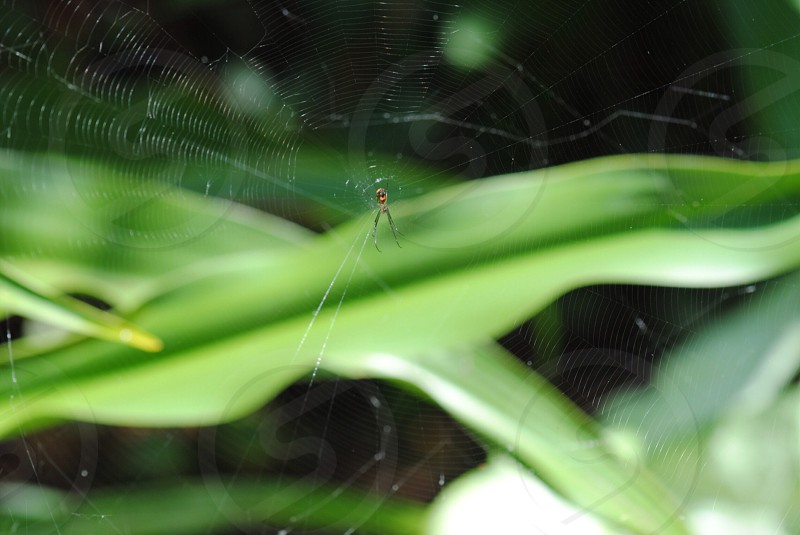 brown orb weaver spider macro photography photo