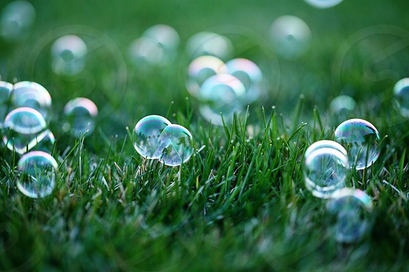 bubbles grass summer outside photo