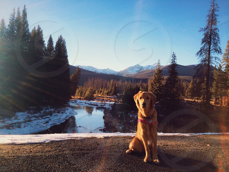golden retriever dog sitting beside lake photo