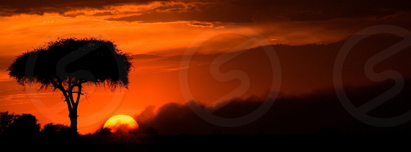A rising sun breaks from behind a cloud and acacia tree in Africa. sunrise Kenya Safari red photo