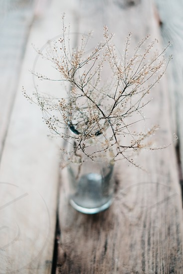 Bottle with the dried up flower photo