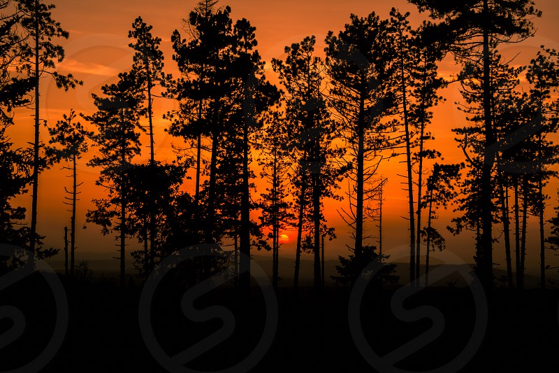 Silhouette of some trees in a forest along the Chianti road near Siena in Tuscany Italy photo