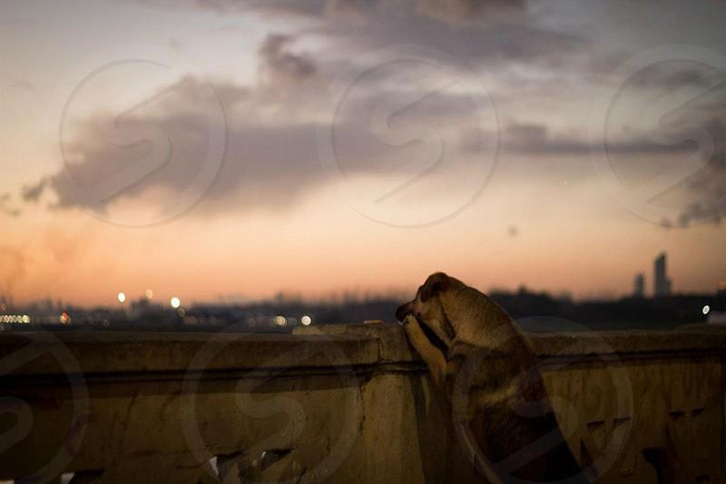 dog on fence  photo