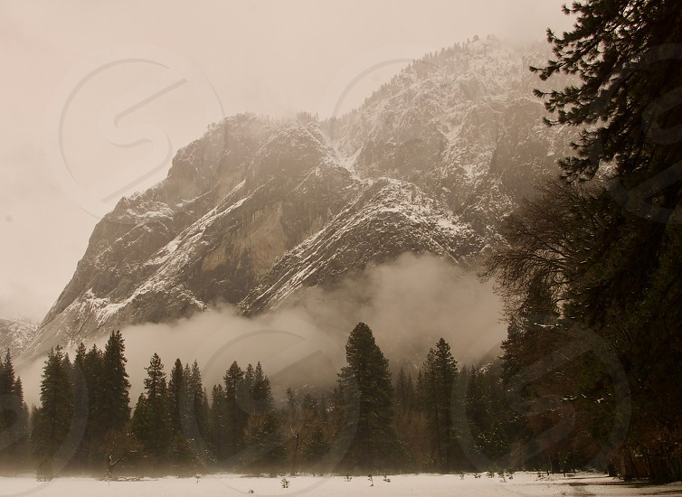Foggy winter day in Yosemite Valley Yosemite National Park California photo