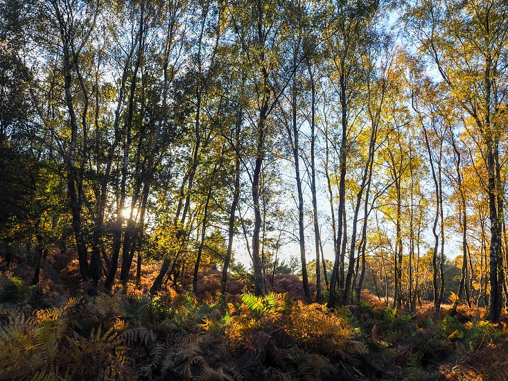 Scenic View of the Ashdown Forest in Sussex photo
