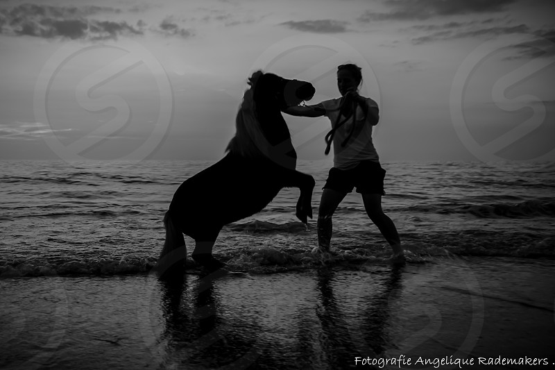 a horse on the beach in silhoutte jumping photo