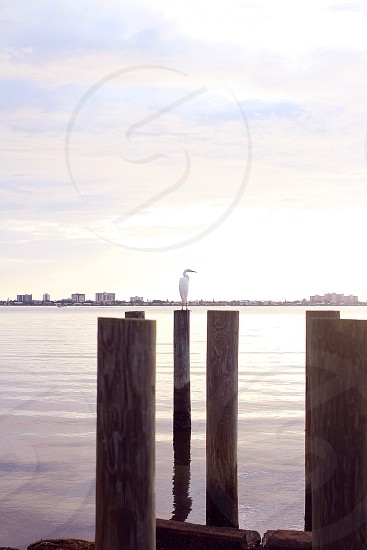 View of white bird on brown wooden log photo