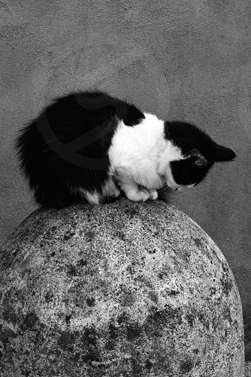 Black and white cat sitting on a boulder  photo