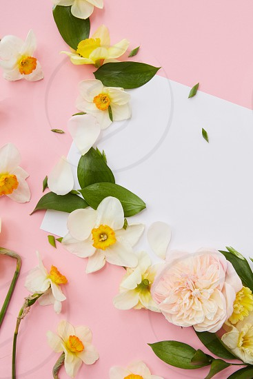 Top view of flowers covering blank copy space where ideas emotions may be noted. White flowers with green leaves represented over pink background. photo