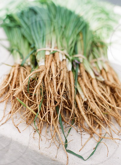 salsify bunch farm fresh farmers market oyster plant winter vegetable  photo