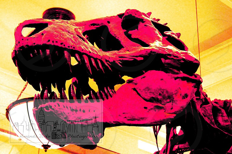 dinosaur figure in pink color photo